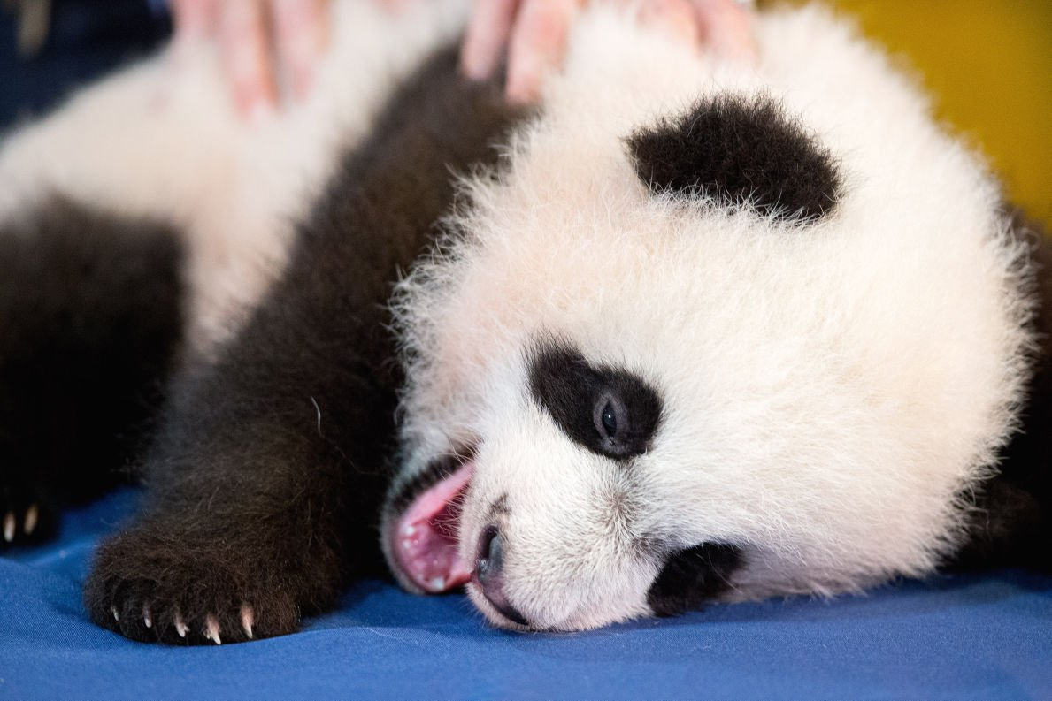 Photos Baby Zoo Animals Entertainment Tucson Com