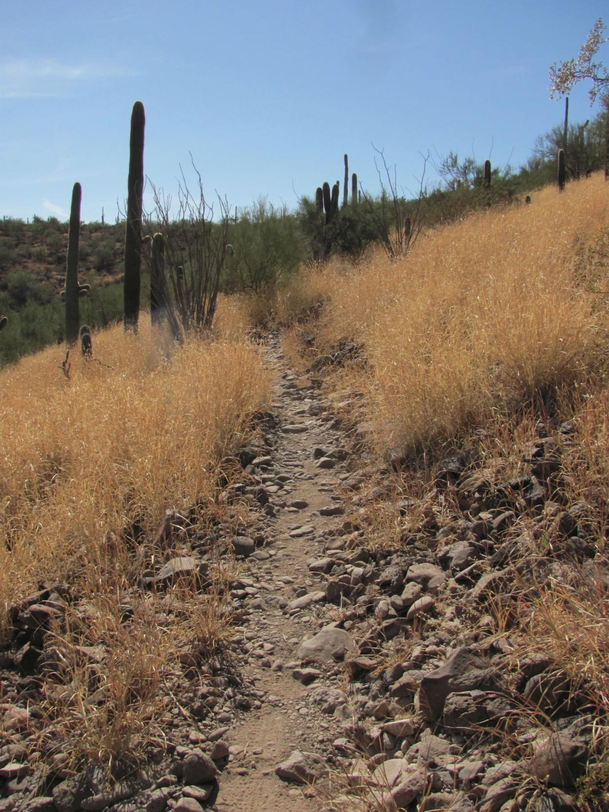 Jimenez Trail
