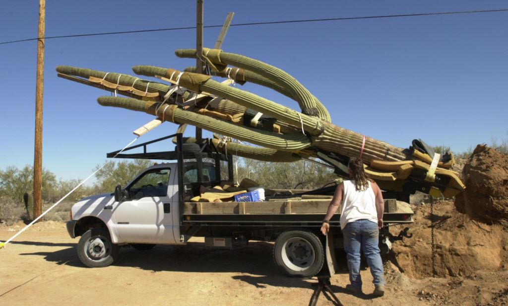 Moving a saguaro