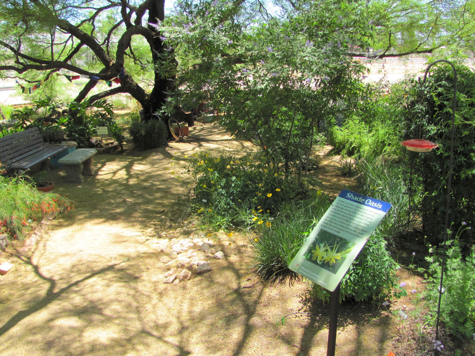 Steller column: 2 million new trees for Tucson? We need a hardy plan