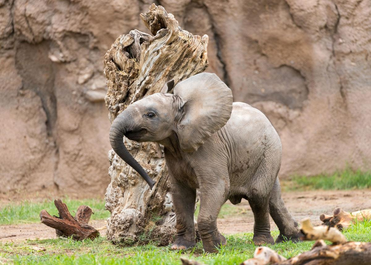 Reid Park Zoo, baby elephant