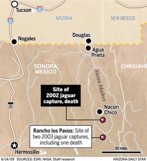 AZ wanted a jaguar collared despite 2 deaths in Sonora