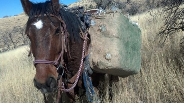 Horse patrol agents