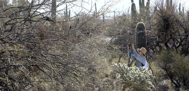 Sabino Canyon the spot for good bird-watching