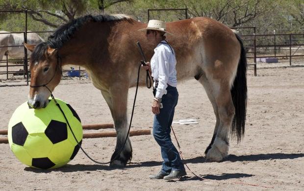 Equine Fundraiser