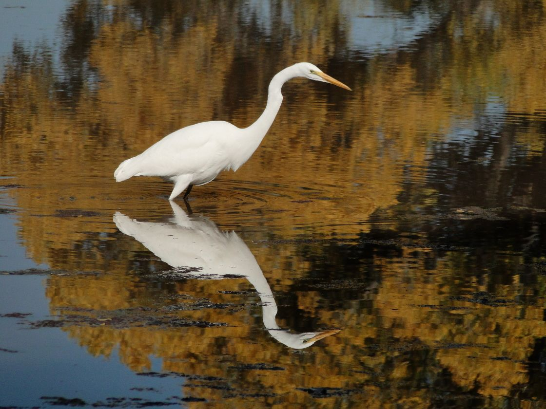 Bird Walk: Environmental Operations Park