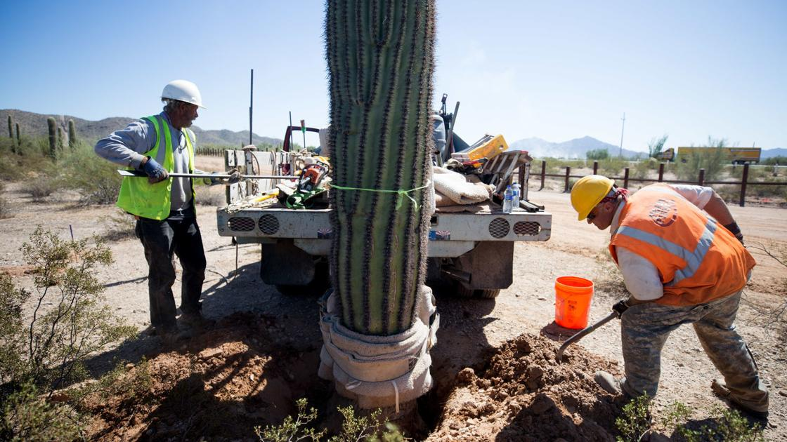 Feds move some saguaros, destroy others for border wall near Lukeville