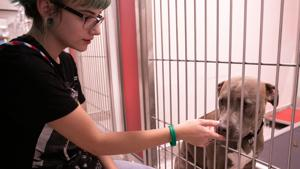Pima Animal Care Center offers free drive-through microchip clinic for pets