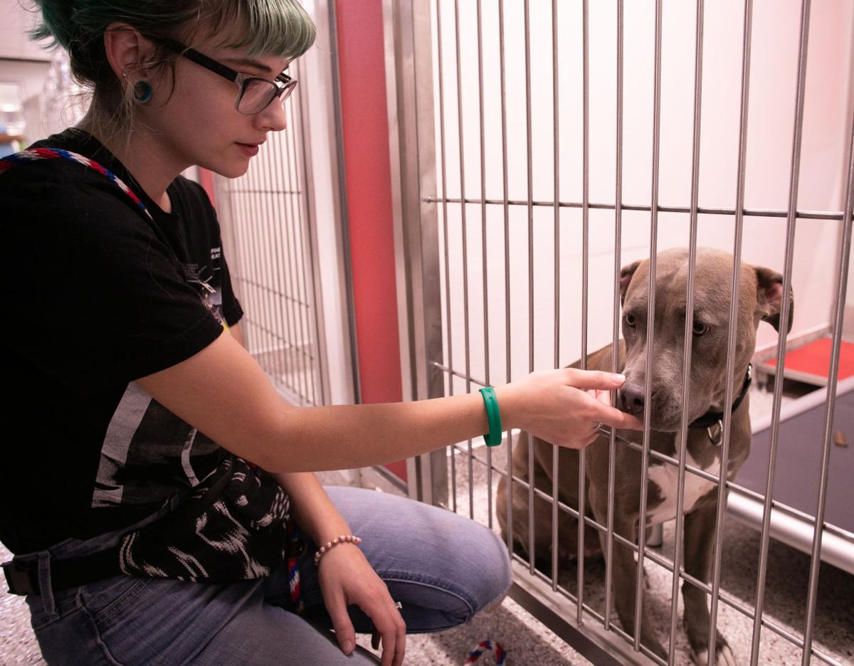 New PACC dog kennel opens