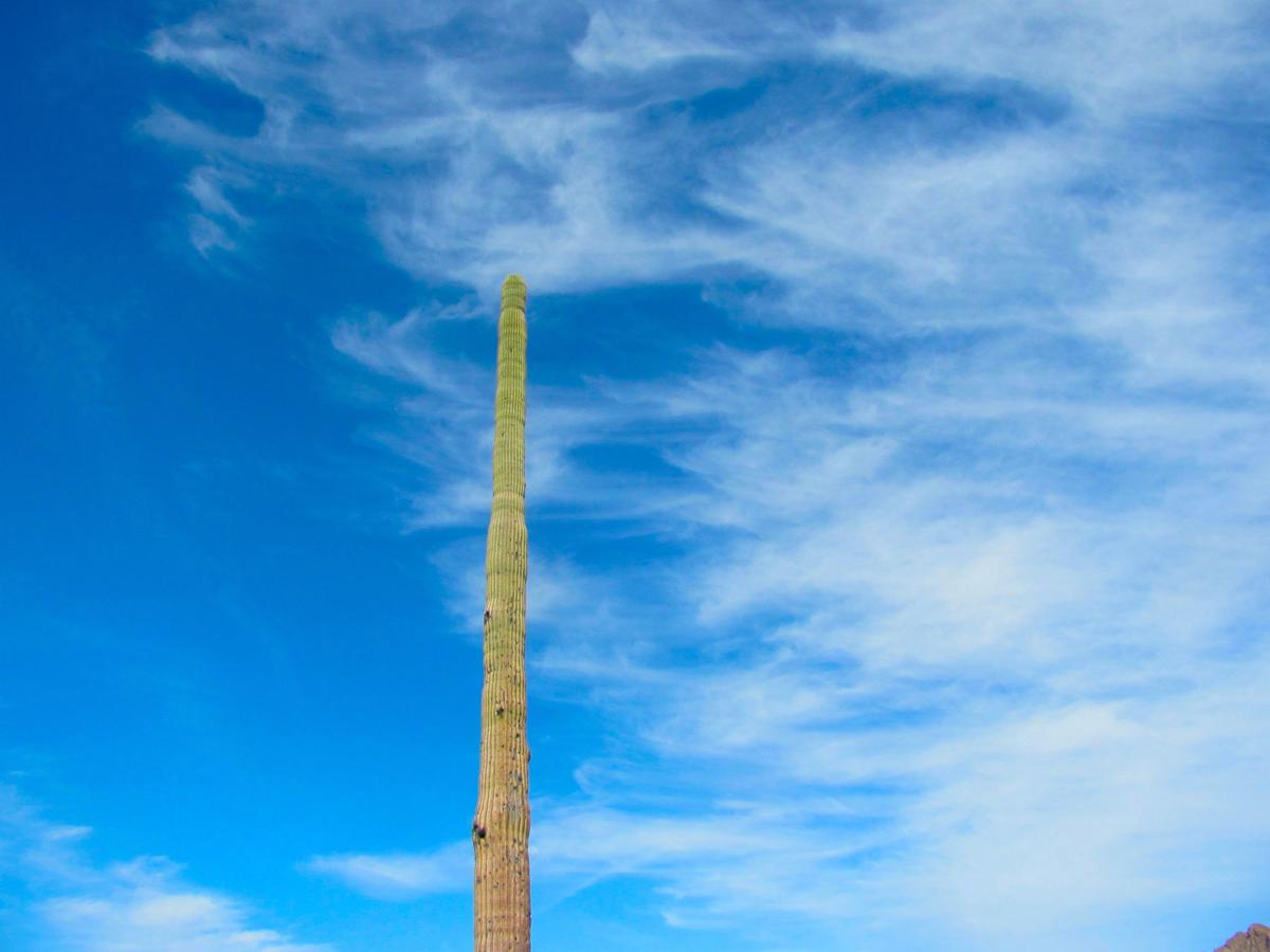 Lone saguaro and clouds