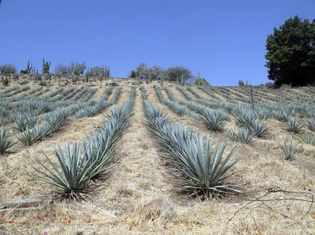 Tequila: the place and the passion