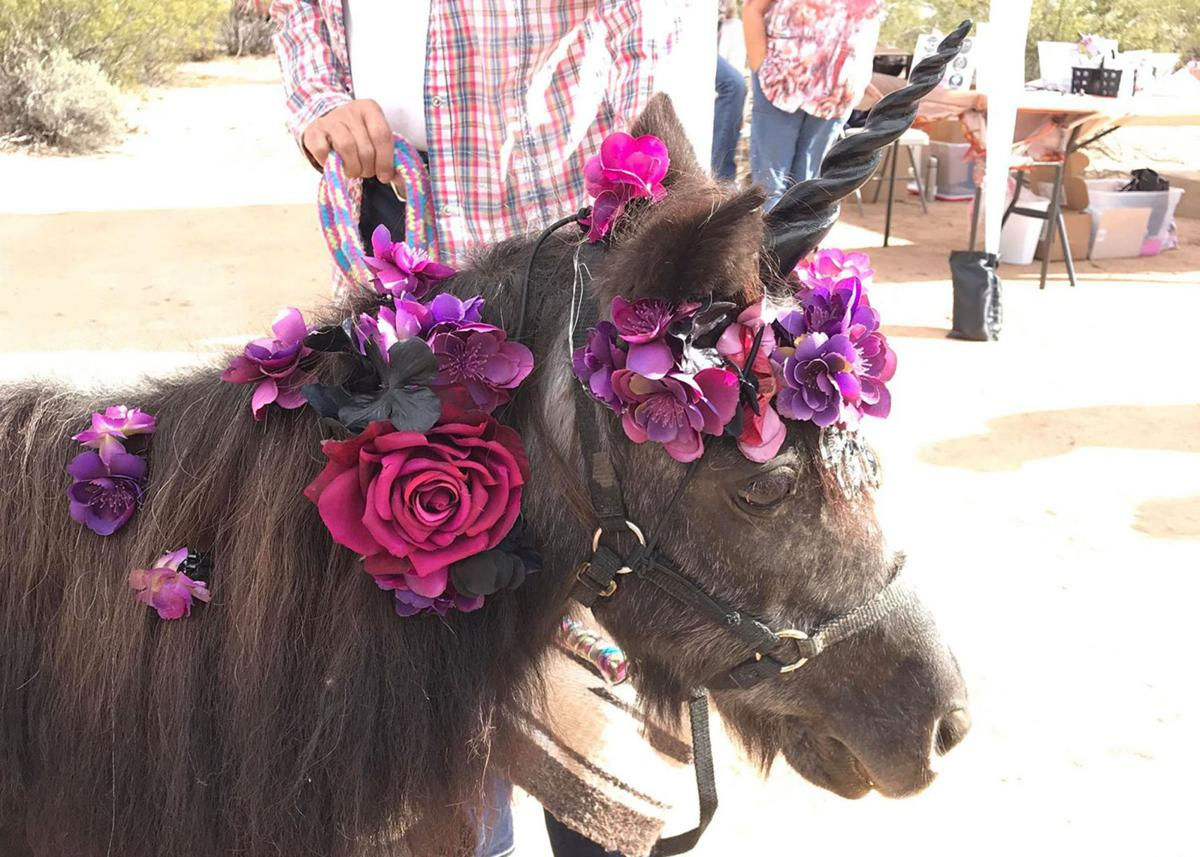Pony - Leman Academy winter bazaar