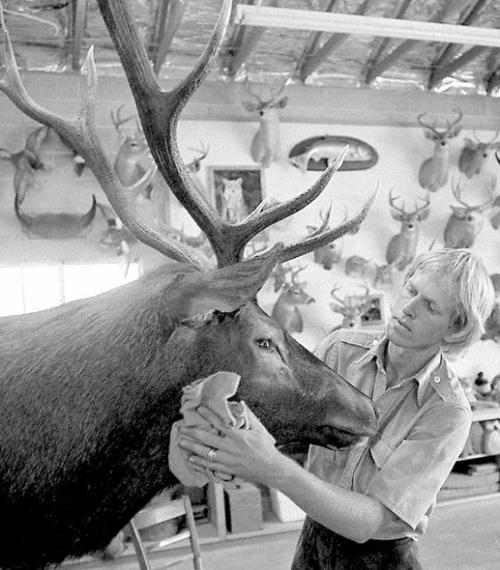 tucson time capsule taxidermist paired art love of outdoors