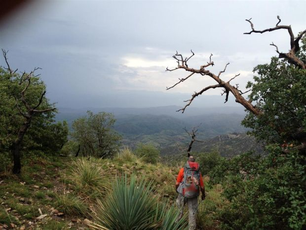 Search continues for Tucson visitor who didn't return from Mt. Lemmon hike