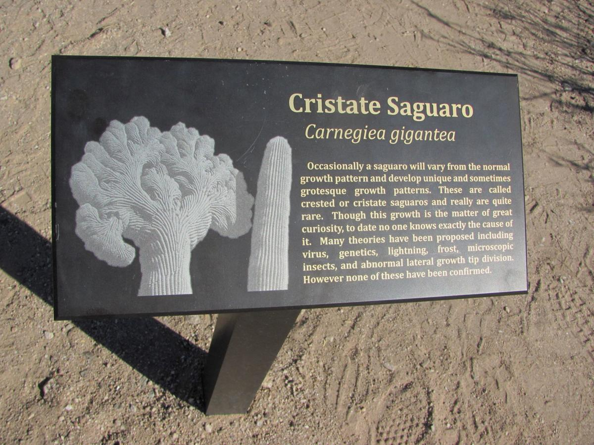 Crested saguaro sign