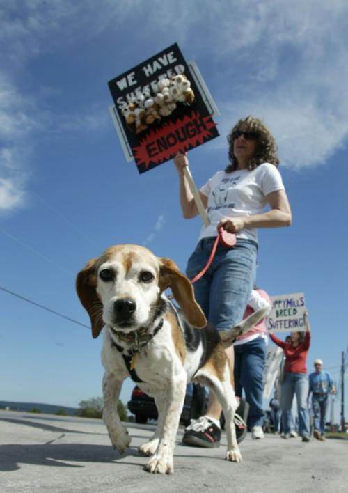 Ducey signs law to override Tucson's pet-store rules | Govt