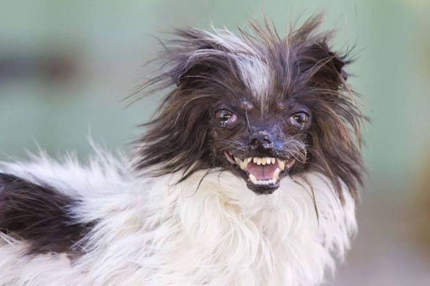 Tucson Mutt Too Cute To Win Ugly Dog Honors Local News