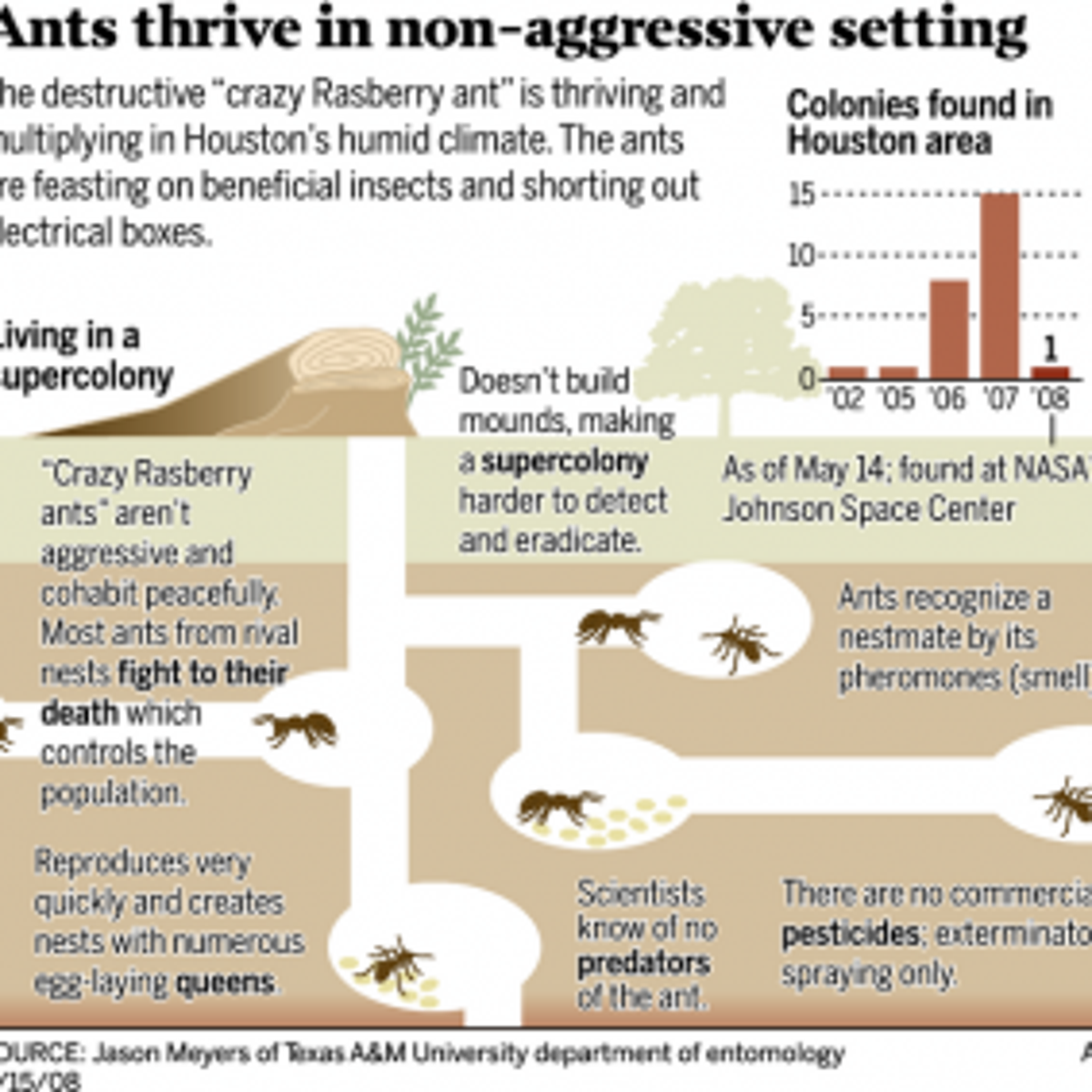 Crazy ants' by the billions are driving Houston area nuts