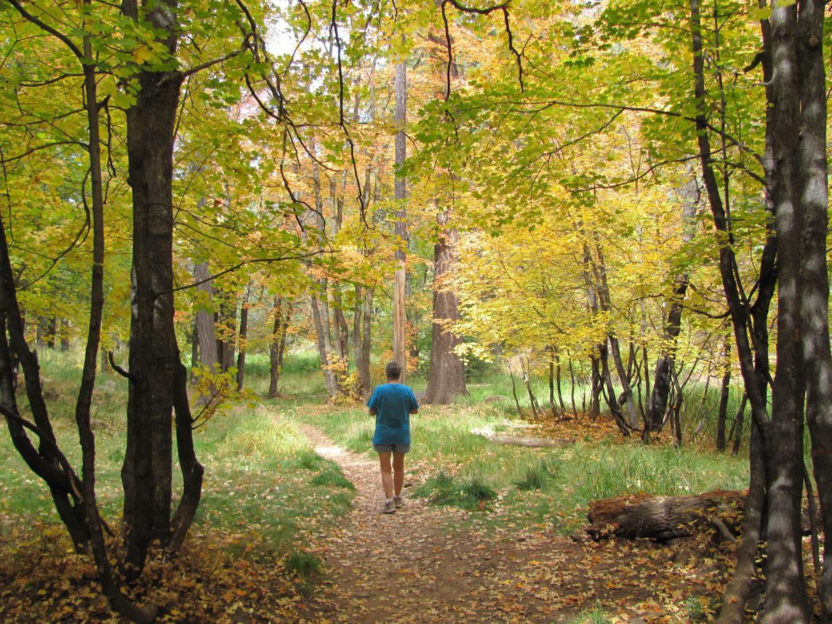 Hiker in autumnal landscape