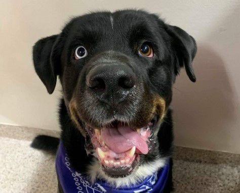 Adopt a friend: Bernard