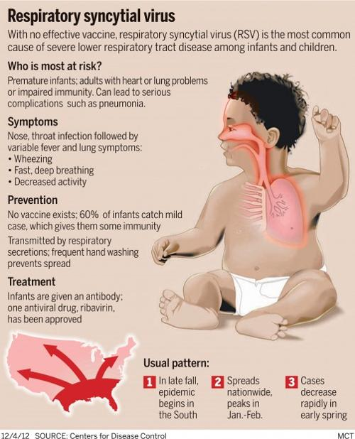 respiratory syncytial virus rsv A phase 1 clinical trial to test the safety and tolerability of an investigational vaccine against respiratory syncytial virus (rsv) has begun at the national institutes of health clinical center in bethesda, maryland.