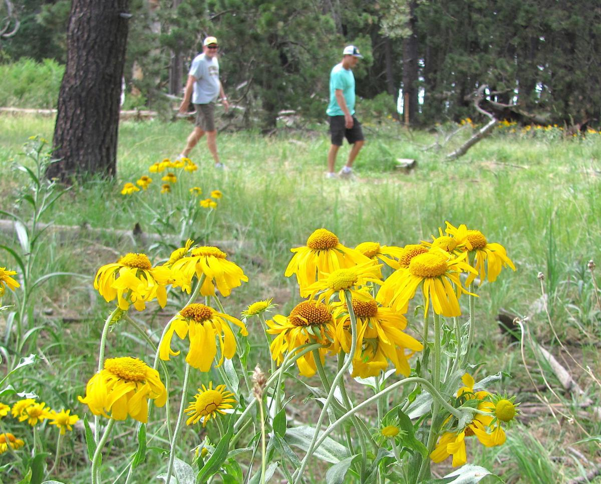 Hikers and wildflowers