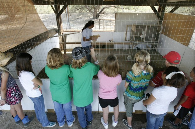 Camp is great for animal-loving kids