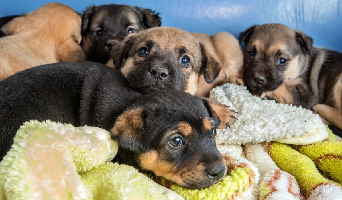 PACC Adoptions