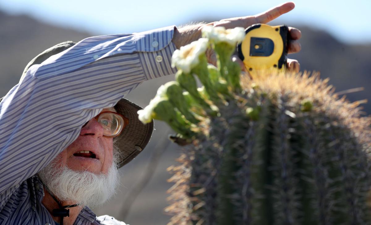 Bill Peachey, Saguaro blooms (LE)