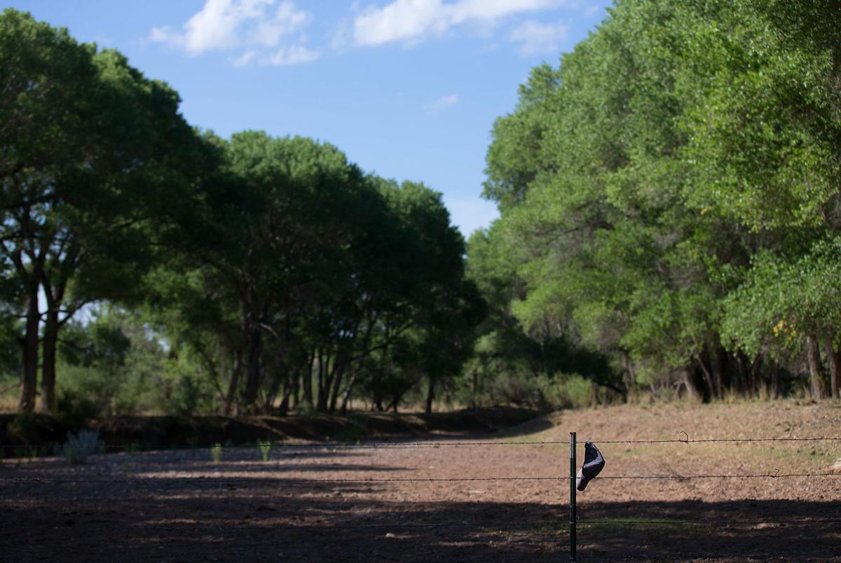San Pedro Riparian National Conservation Area