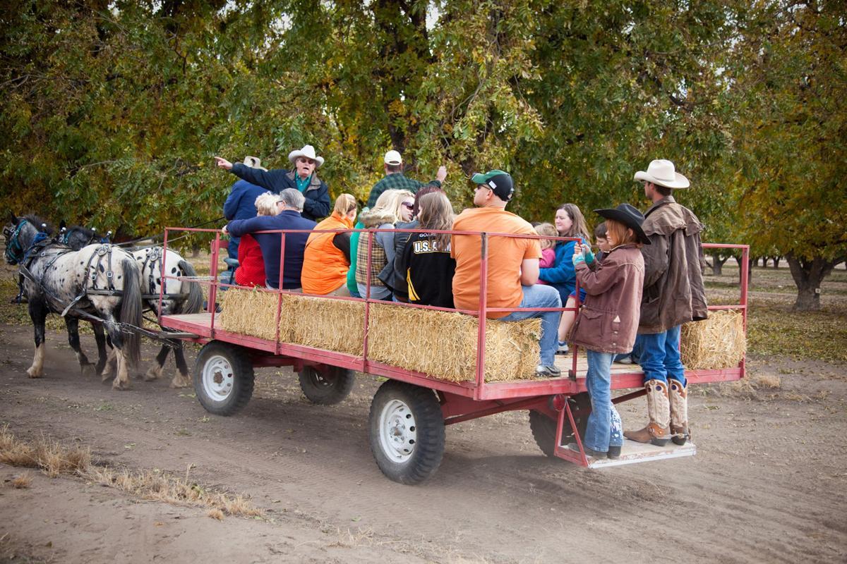 Saturday, November 12 - Celebrate Sahuarita at the 8th annual Pecan Festival