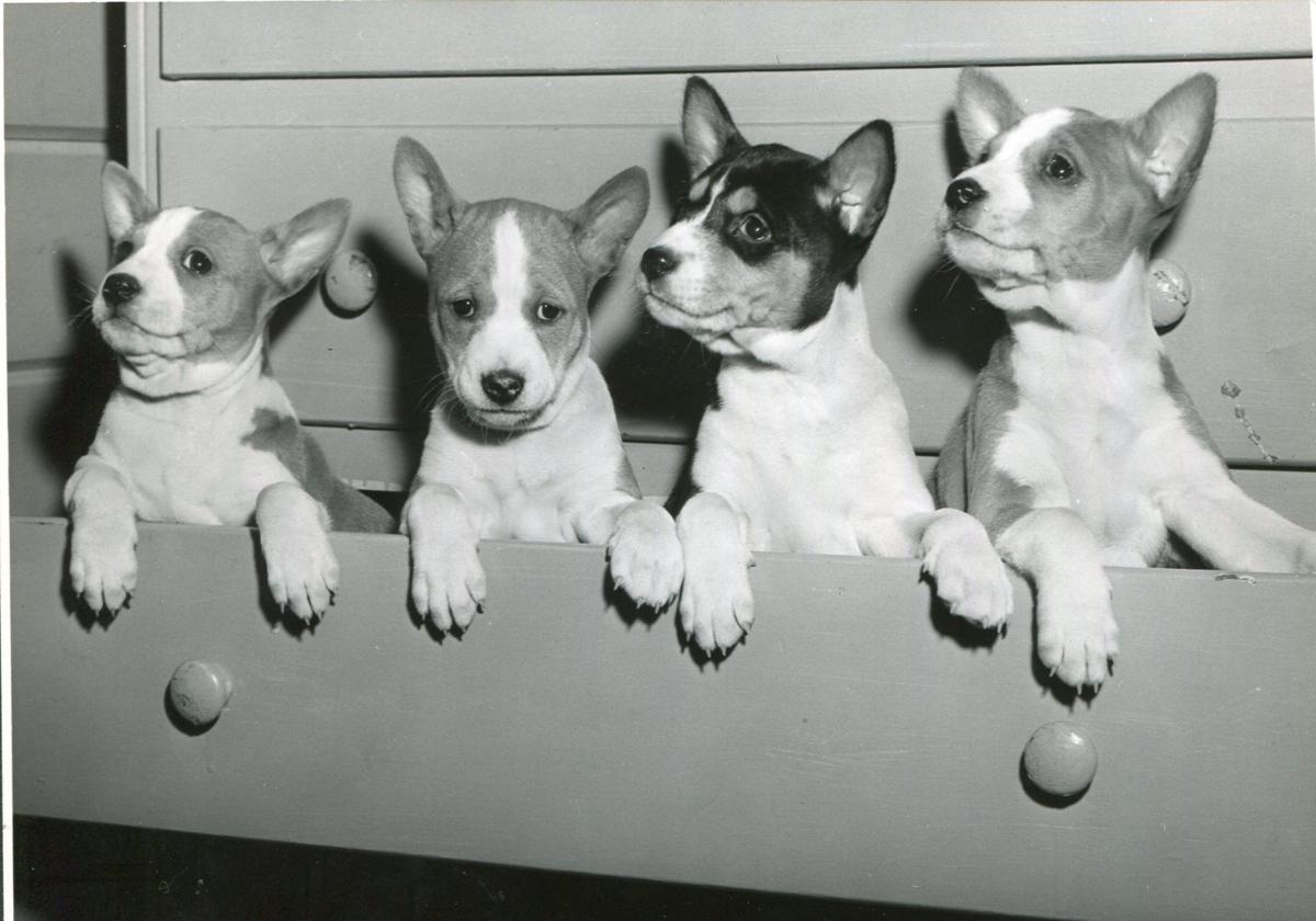 Pups in a drawer (1960)