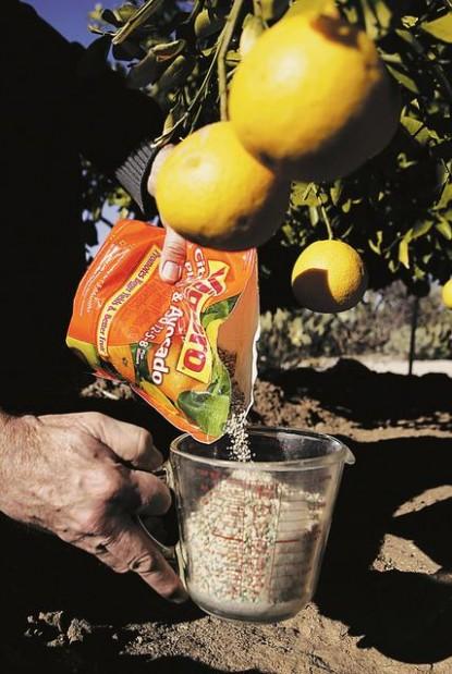Fertilize Your Citrus Trees Tucson Gardens Tucson Com