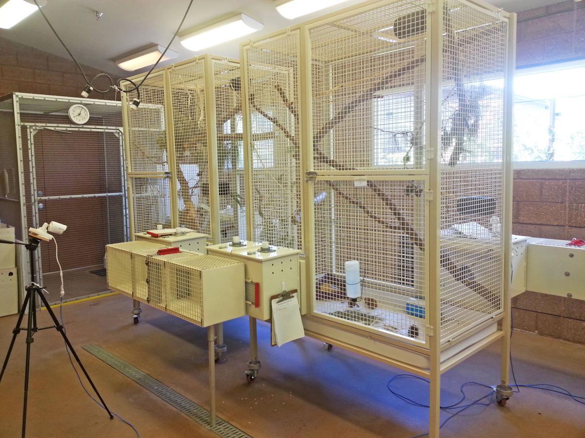 Red squirrel breeding program