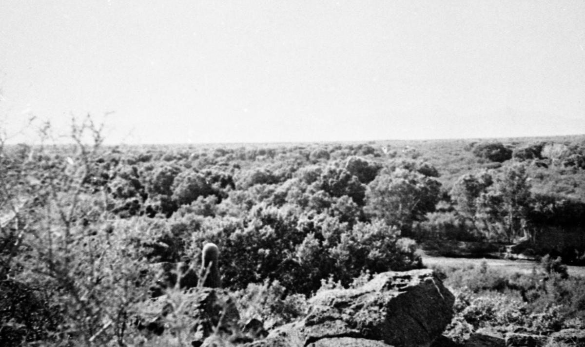 Santa Cruz River, 1942