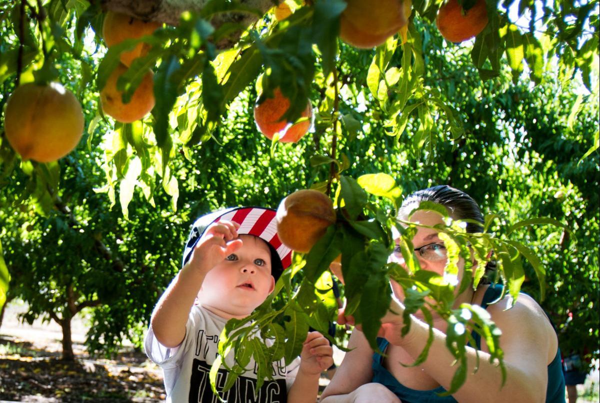 Peach Mania at Apple Annie's