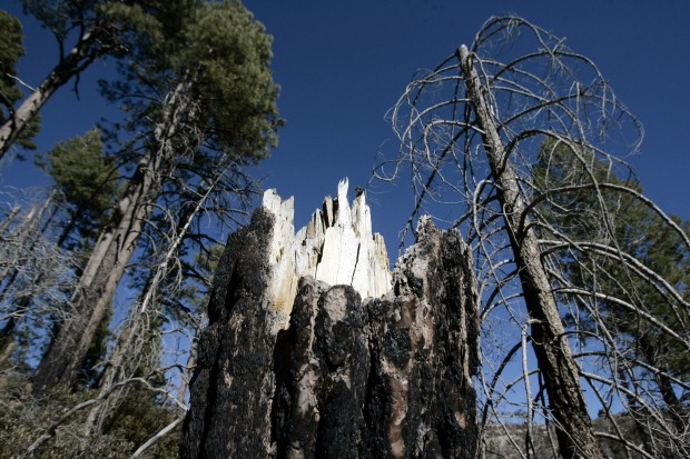 Highaltitude Forests Face Bleak Future Here Wildfire Tucsoncom - Altitude here