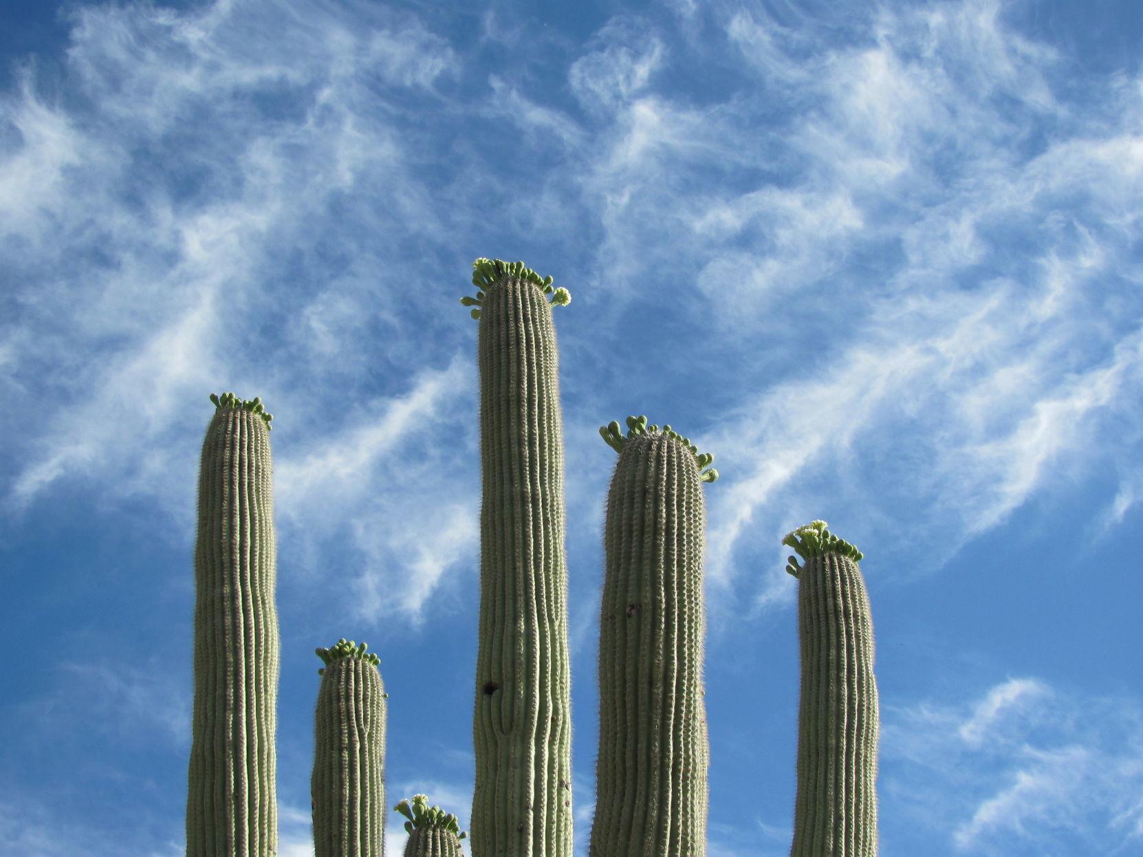 Een Warme Winter : Tucson weather warm winter days around the corner local news