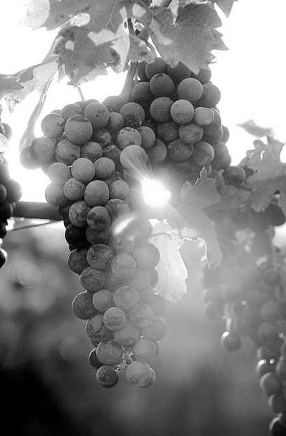 Arizona wineries say direct-sales vital tool