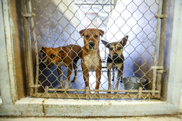 Tucson Animal Shelter Dog Adoption
