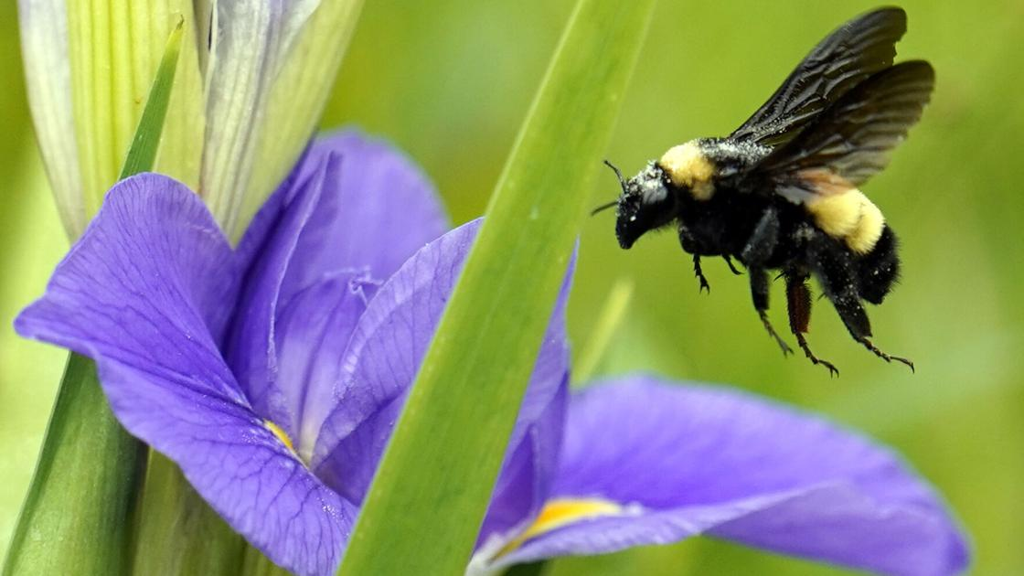 'Bee' prepared for insect stings