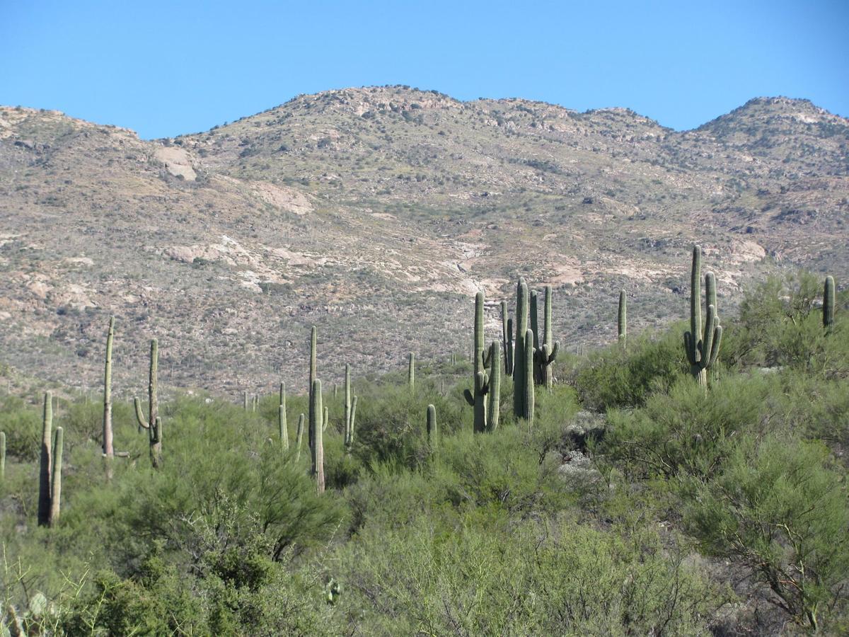 Ridge View Trail