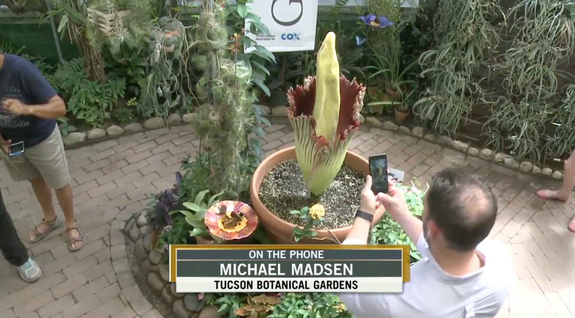 Tucson Botanical Gardens extends hours today  to visit Rosie the 'corpse flower' | Tucson.com