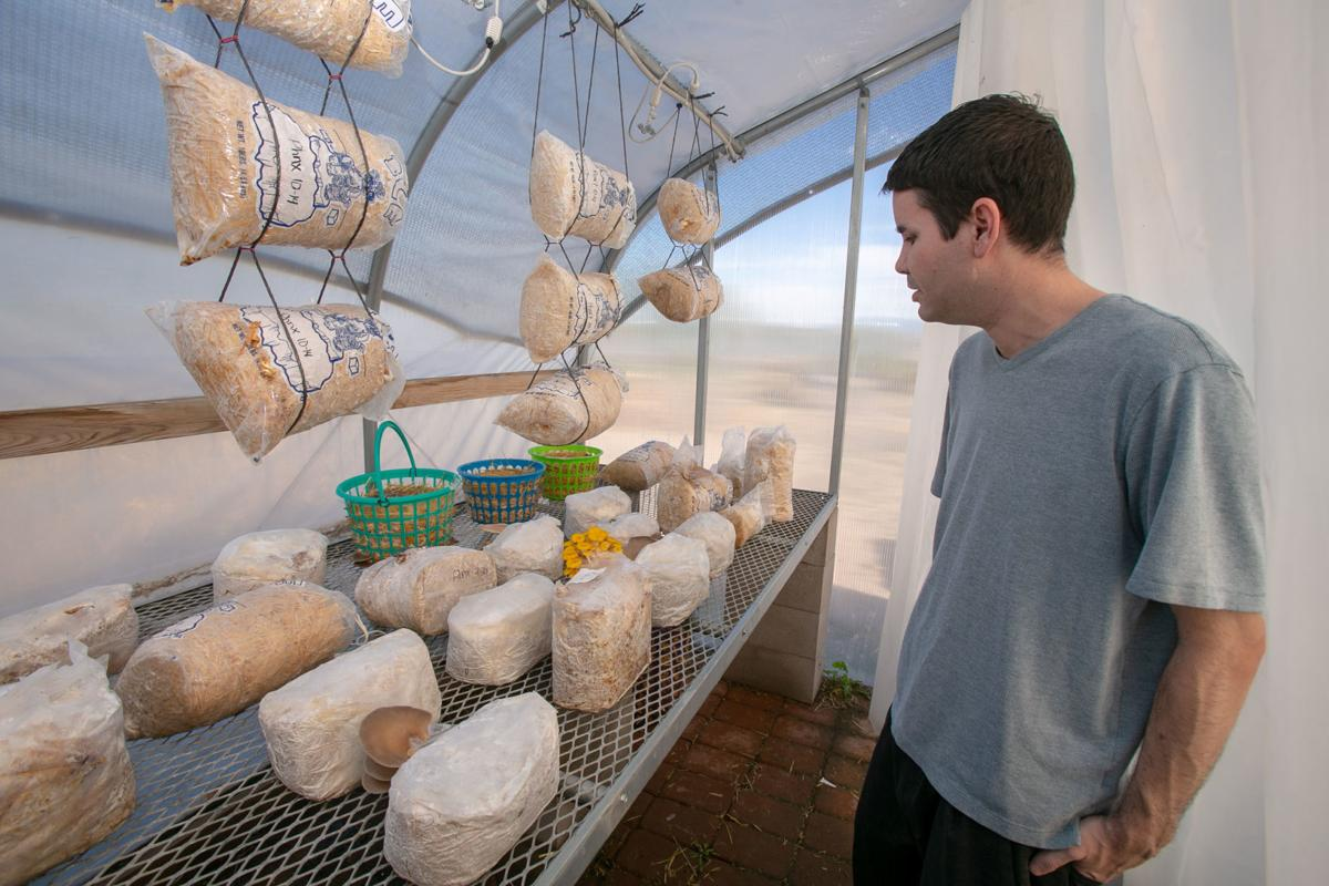 Arizona Mushroom Growing Group