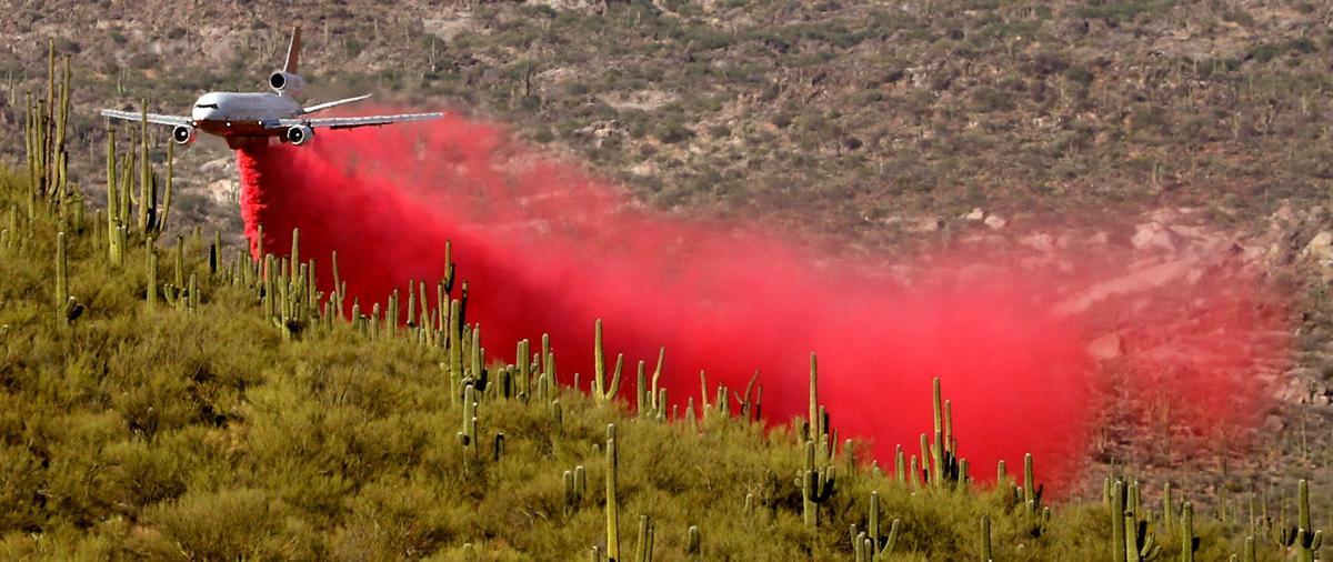 Bighorn fire saguaros