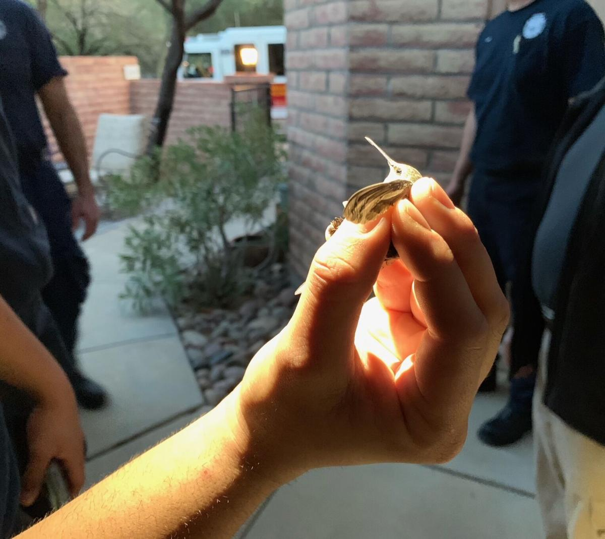 Firefighters rescue hummingbird