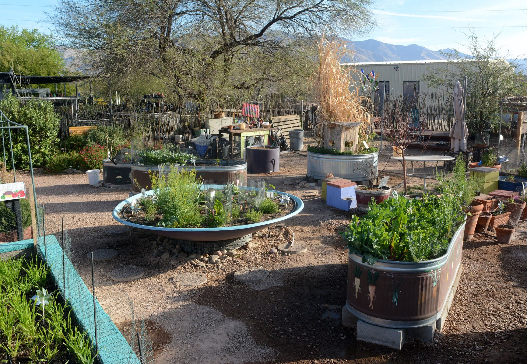 5 Tips For Container Gardening In The Desert Heat Tucson Summer Guide Tucson Com