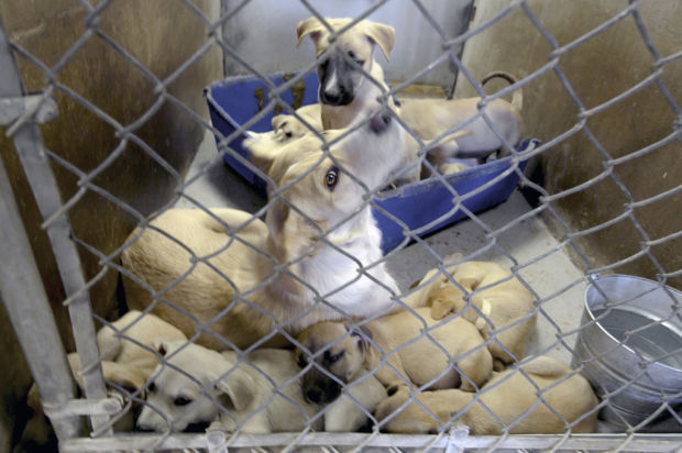 'Look in your heart,' adopt a pet who's in urgent need