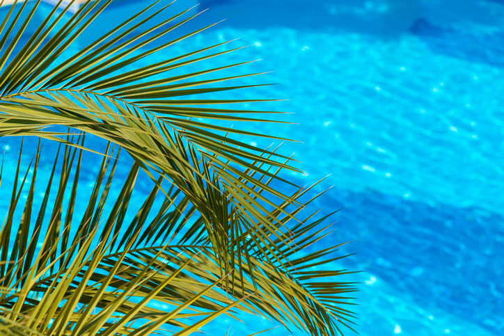 Palm frond near swimming pool