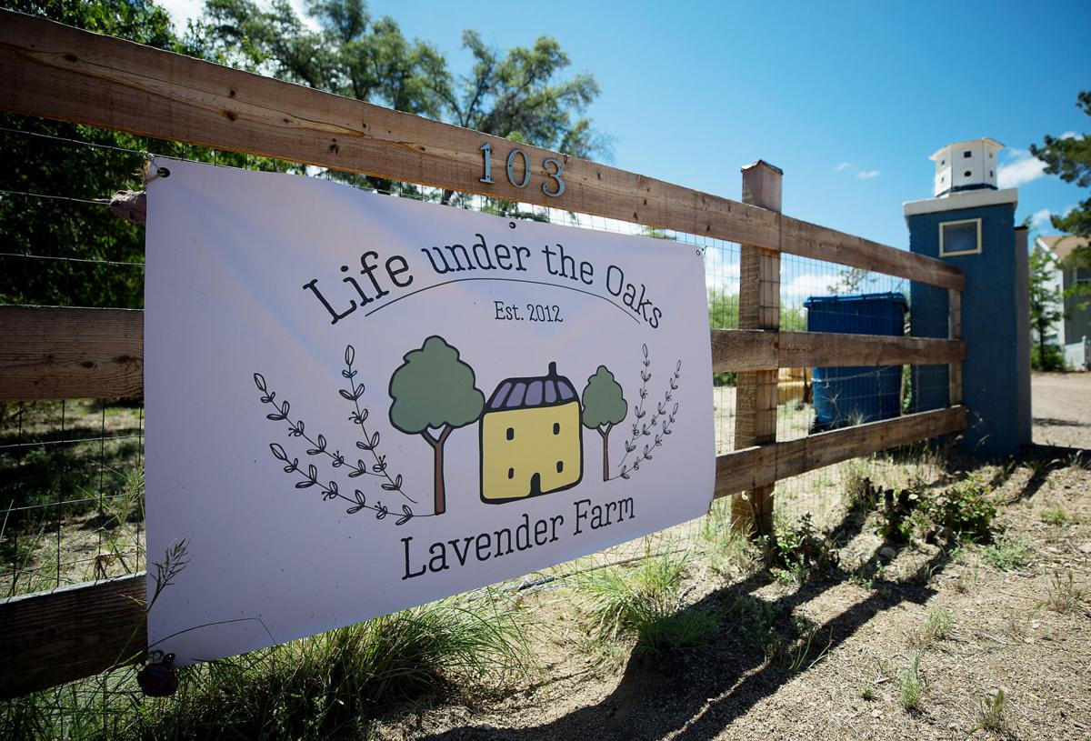 Visiting Oracle's dreamy new lavender farm is like stepping into a